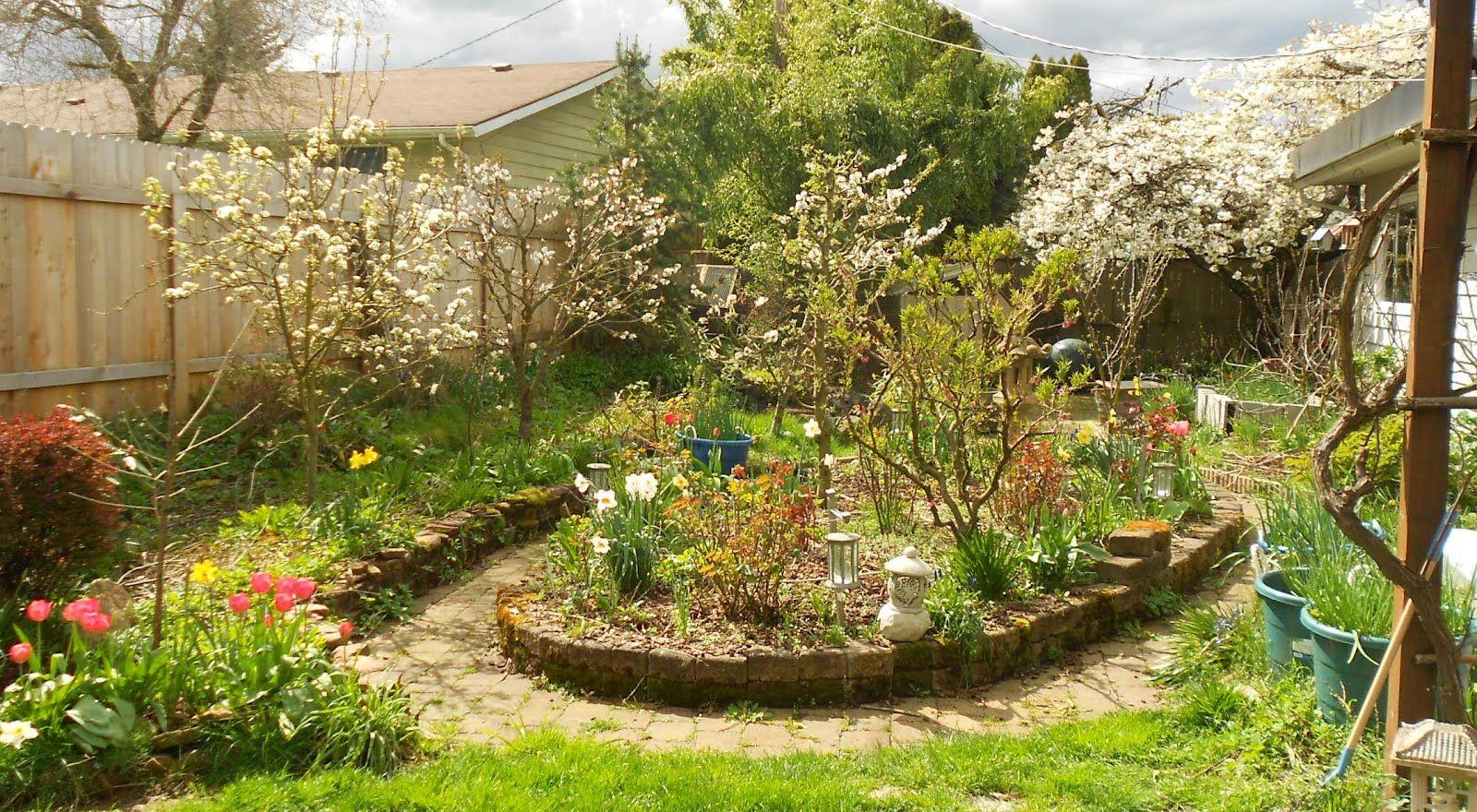 Mulberries | Small backyard landscaping, Backyard, Small ...