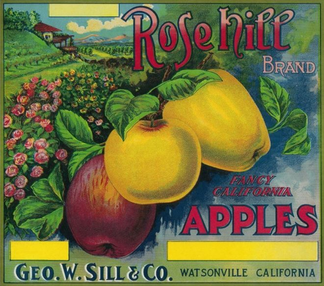 Rose Hill Apple Crate Label – Watsonville, CA