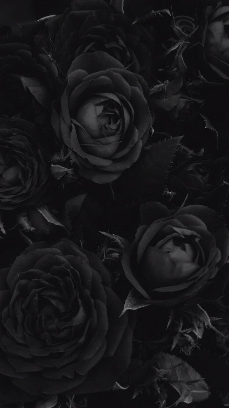Pin On Art Wallpaper Iphone black and white roses wallpaper