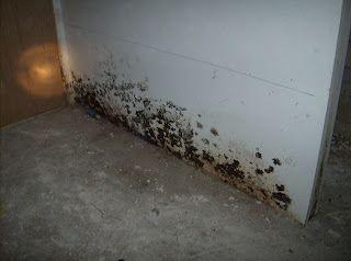 Toxic Mold In Bat