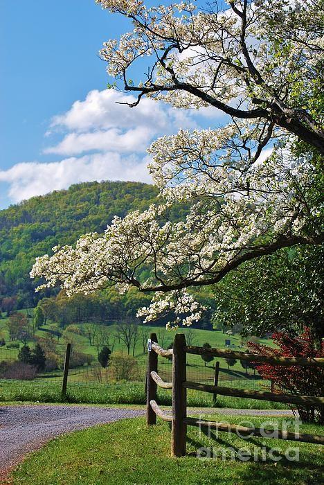 Perfectdrivewayvert By Tsc Photography Timothy Cuffe Jr Spring Scenery Landscape Photography Fine Art Landscape Photography