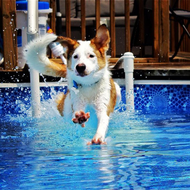 """""""Mom, watch me dive."""""""