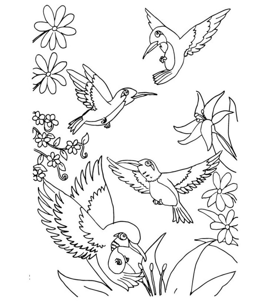 Top 10 Hummingbird Coloring Pages For Your Toddler Bird Coloring Pages Animal Coloring Pages Hummingbird Coloring Pages