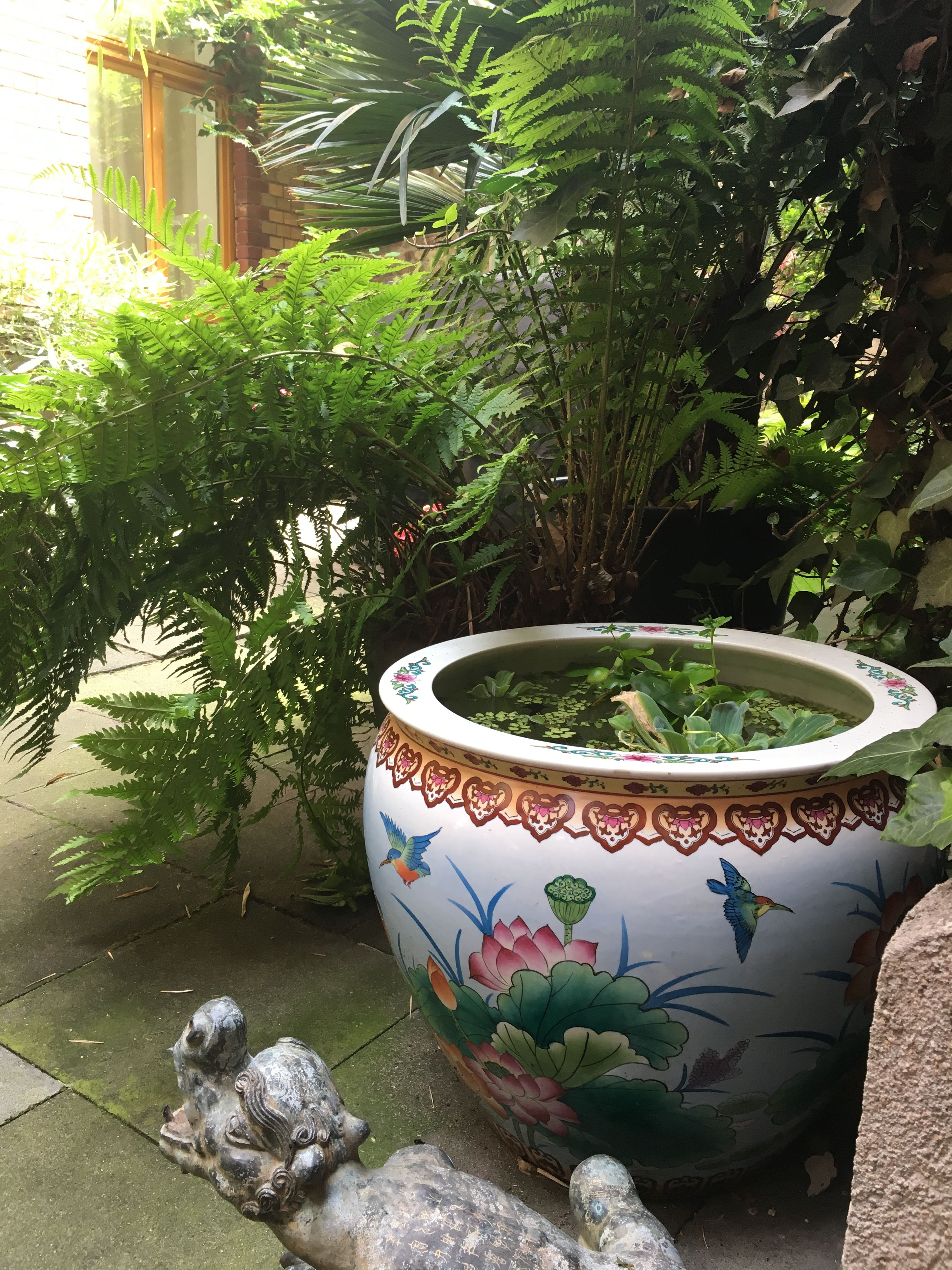 Container water garden chinese goldfish pond in pot for Pot pond ideas