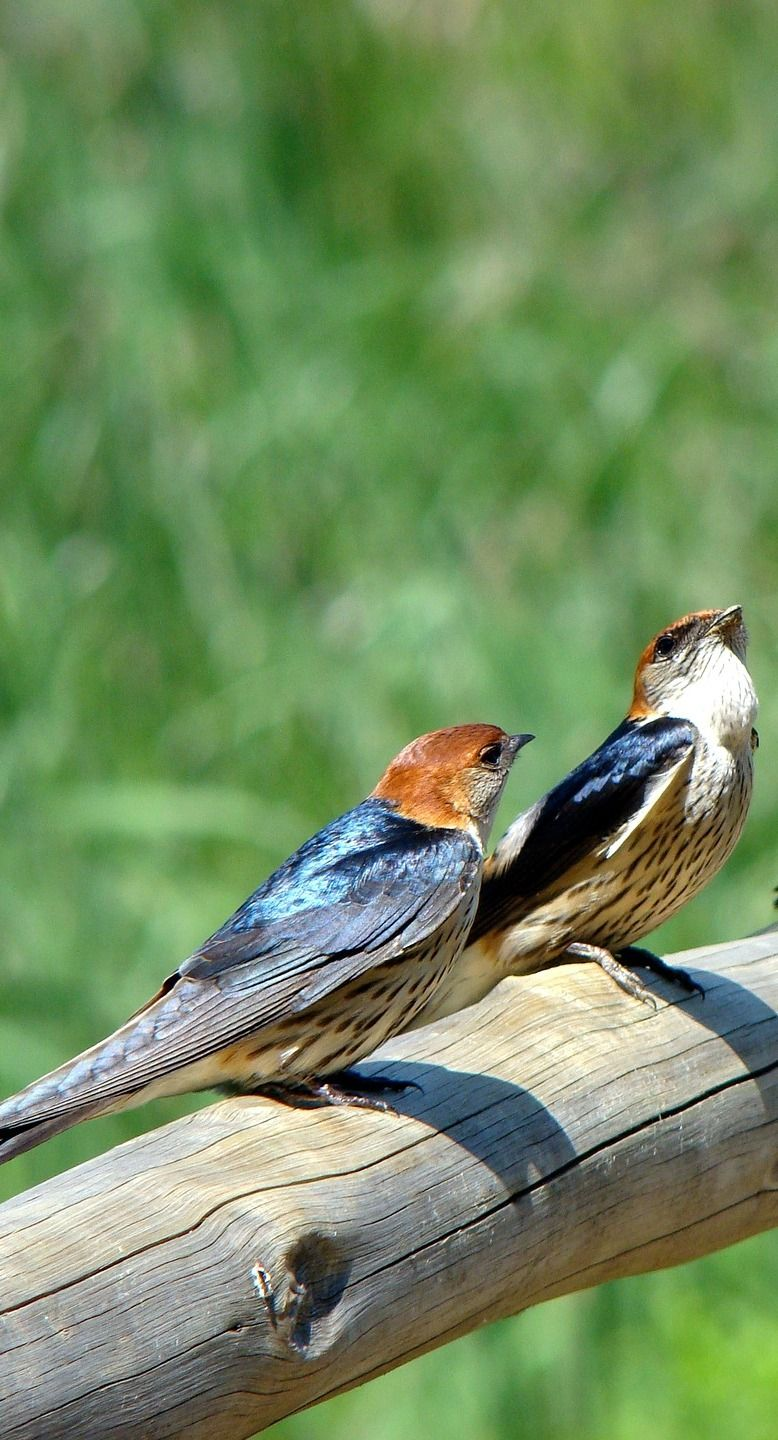 How some birds perform best duets of all time? Birds