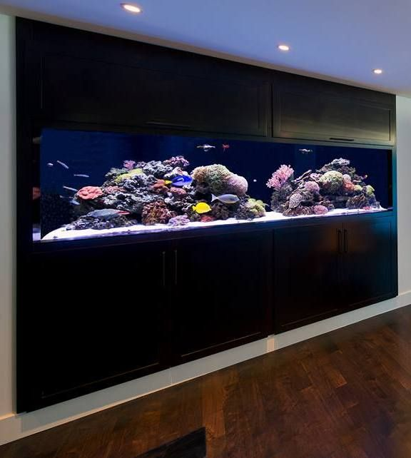 Home Aquarium Design Ideas: 20 Of The Coolest Wall Fish Tank Designs
