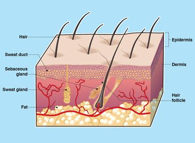 LAYERS OF YOUR SKIN | Trent's Science Thingy | Science