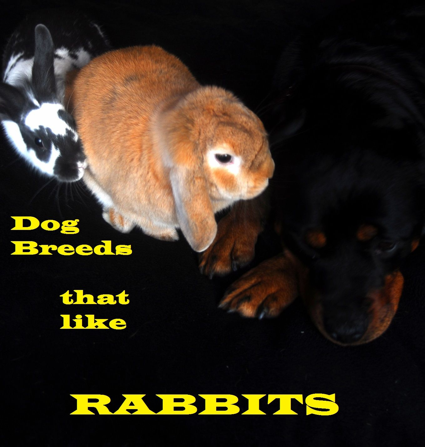 Dog Breeds That Will Get Along With Your Rabbit Dog Breeds Dogs