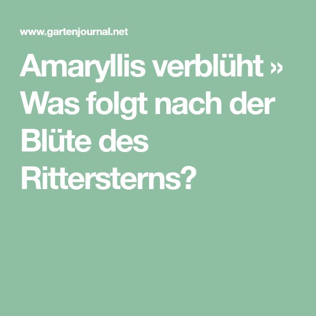 Amaryllis Verblüht Was Folgt Nach Der Blüte Des Rittersterns