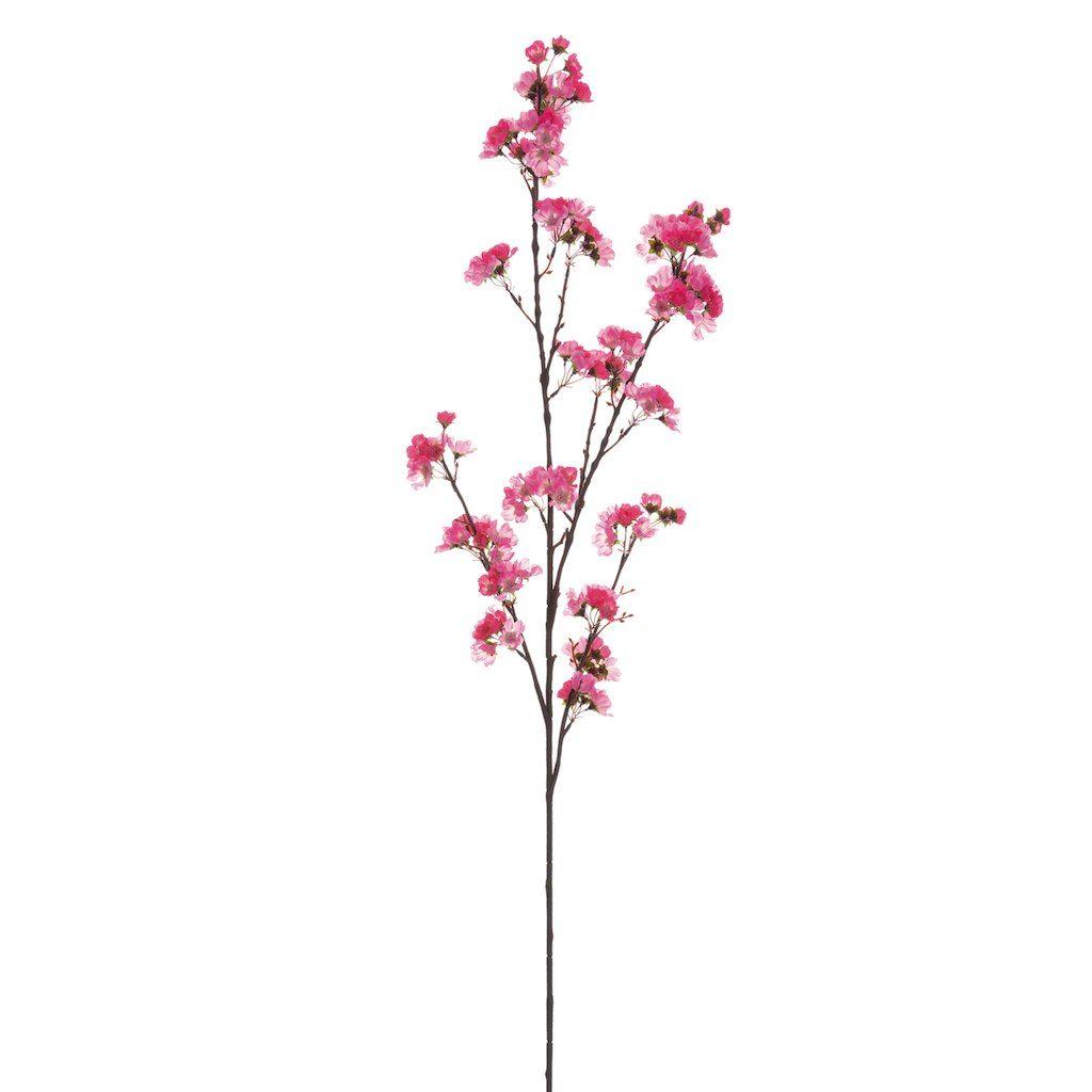 Two Tone Pink Cherry Blossom Stem Cherry Blossom Blossom Blossom Tattoo