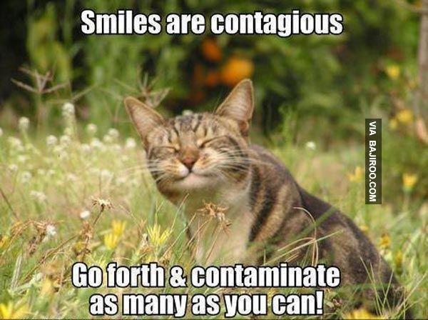 Funny Meme Smiley : Smile meme google search funny stuff pinterest smile meme