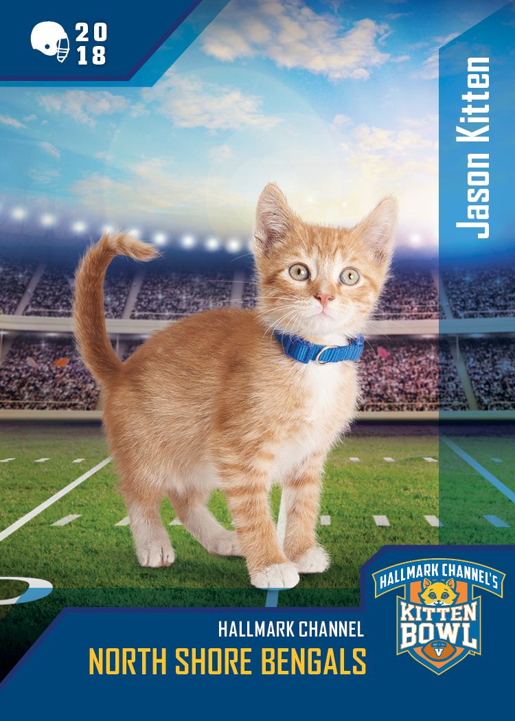 Flashback Furday Jason Kitten Helped Clinch One Of The Four Kitten Bowl V Playoff Spots This Year Good News Like All The Kitten Bowls Kittens Cutest Kitten