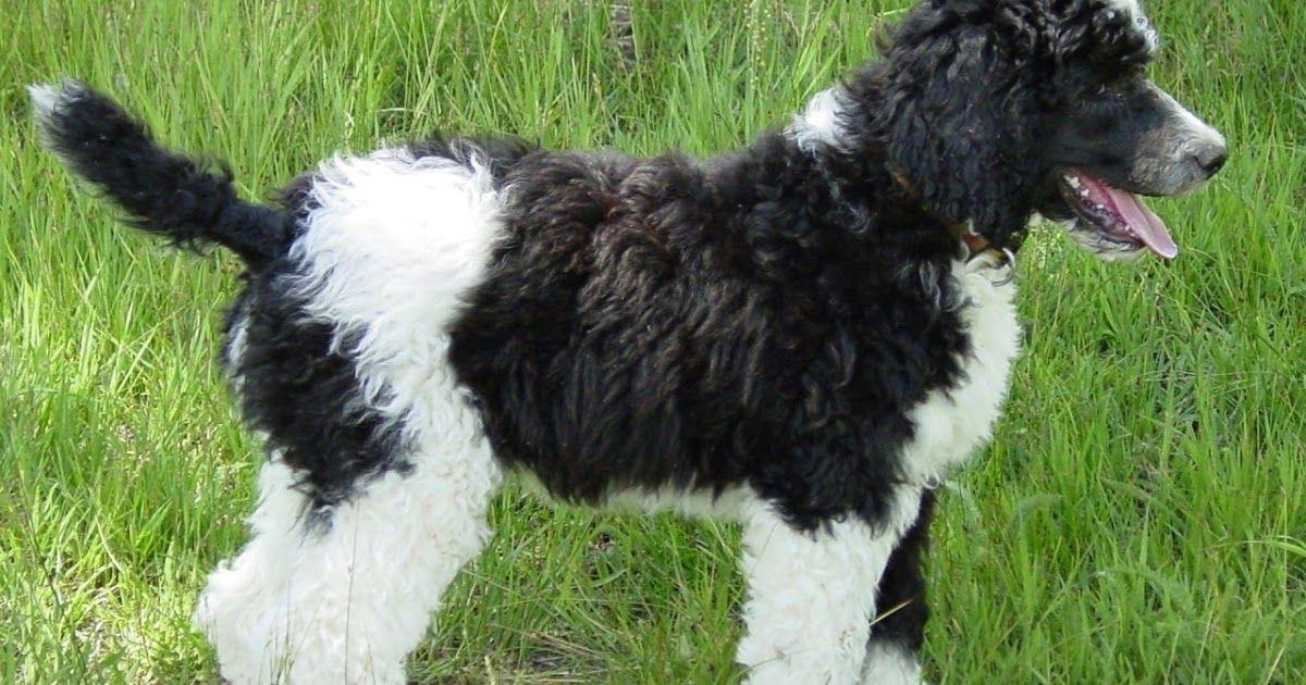 Menakjubkan 27 Wallpaper Anjing Lucu Hd Dog Wallpaper Dogs