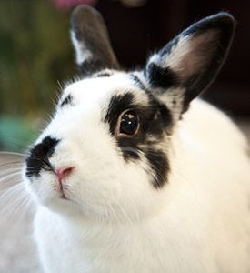 Aspca Steps Up To Help Bunnies In Need With Images Easter Pets