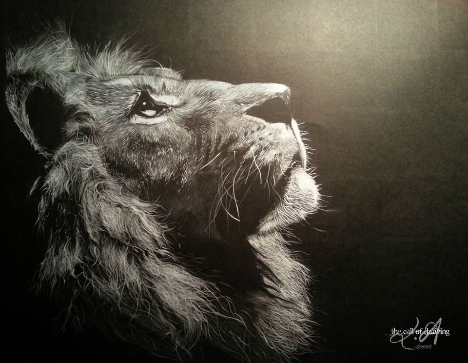 "Animals Black And White Elephants 10000 Lions Big Cats: White Colored Pencil On Black Paper ""Lion"""