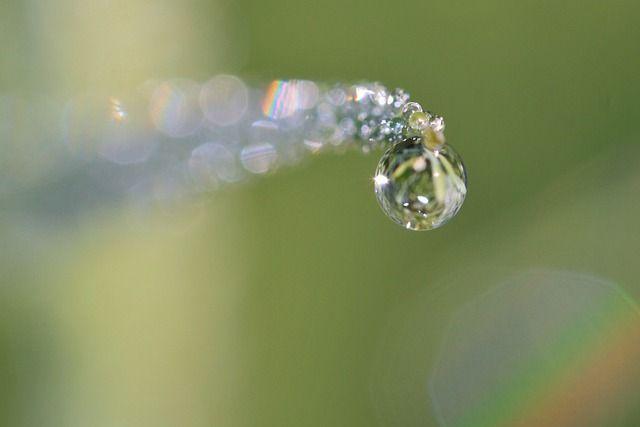 보석처럼 빛나는 물방울