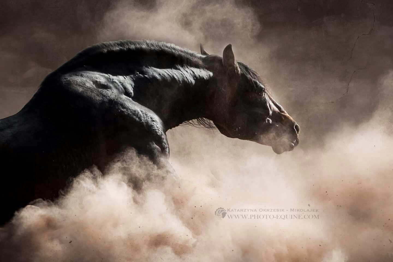 Pin Von Tammy Senger Auf Wild Horses 2 Tiere Pferdeliebe