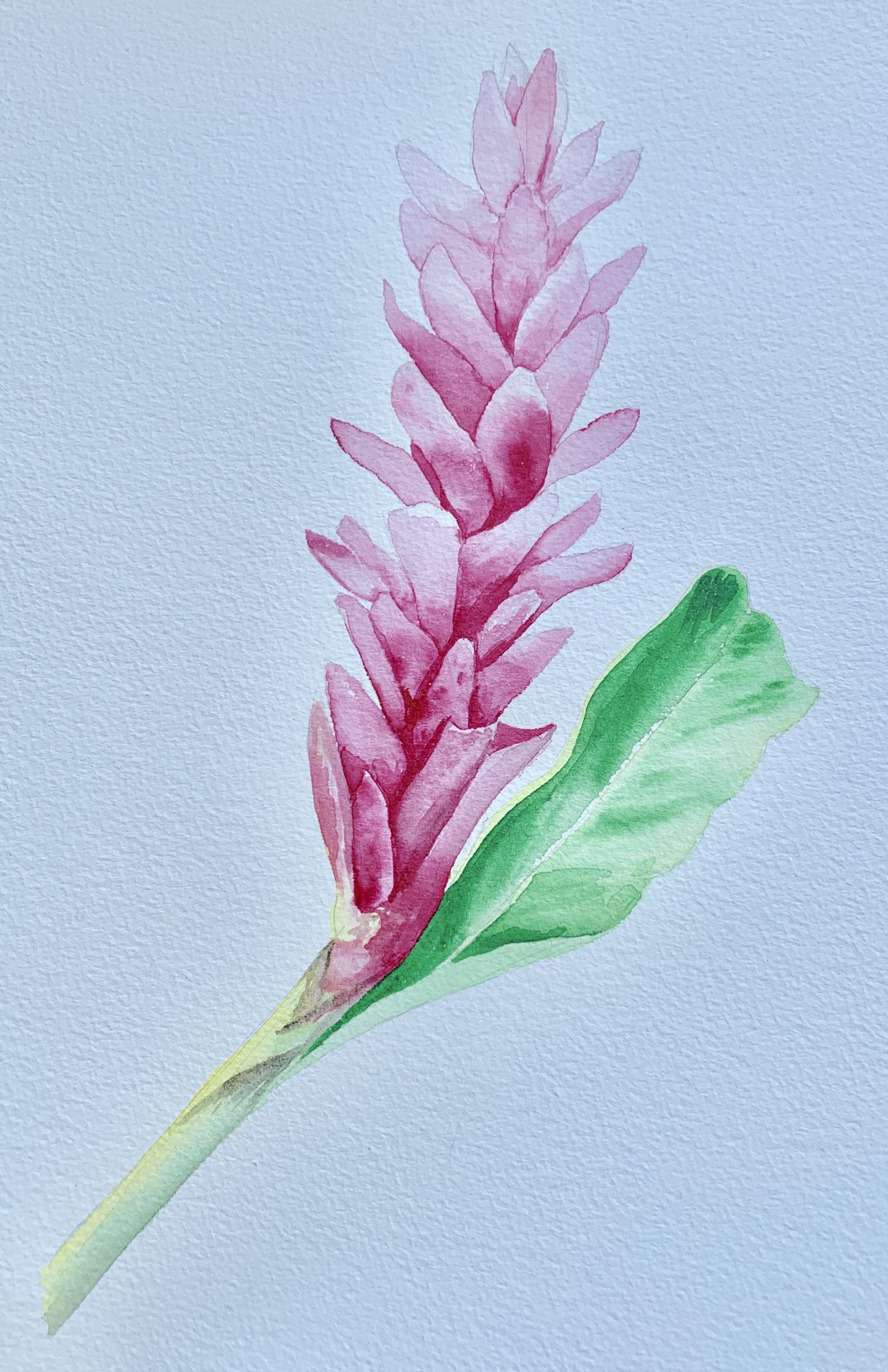 Ginger Flower Watercolor Instagram Caramiyamaui Ginger Flower Watercolor Flowers Watercolor