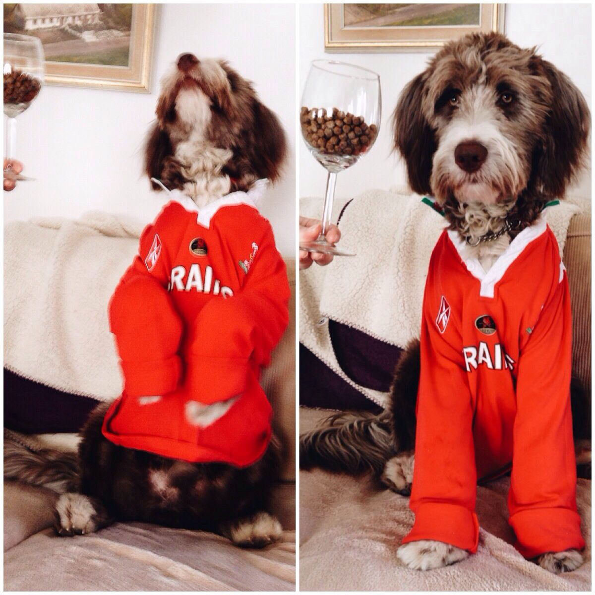 A Welsh supporter of rugby