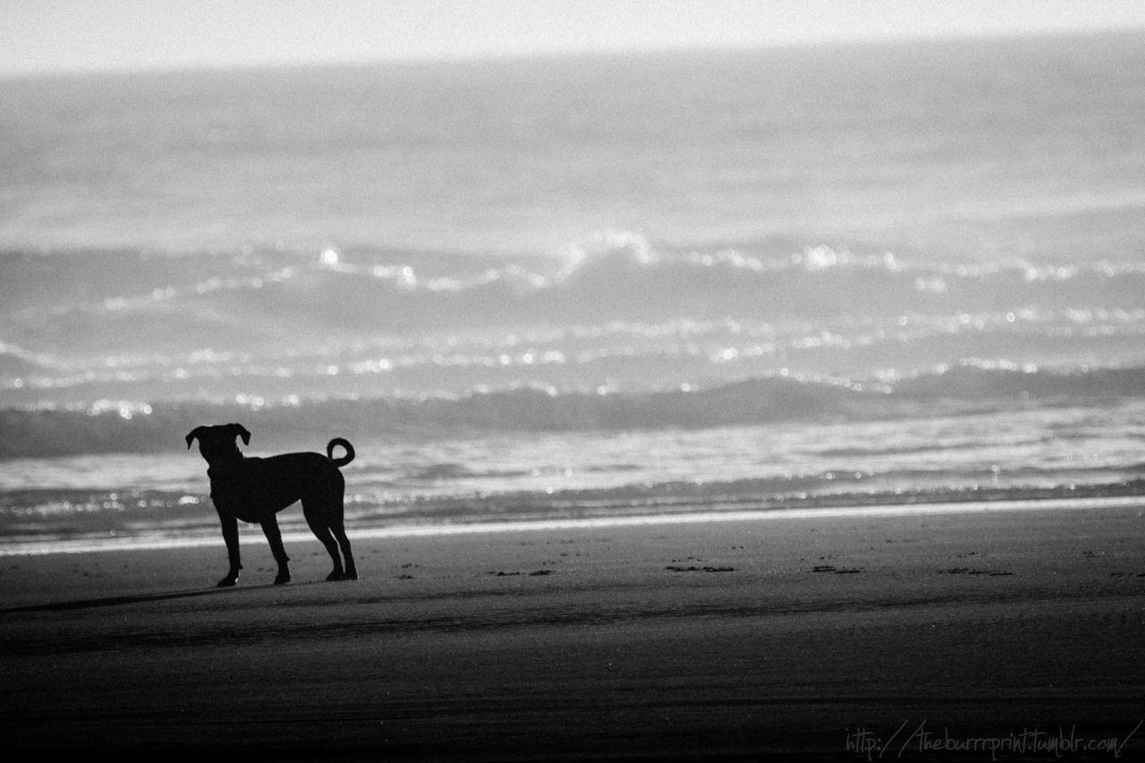 pitty on the beach….