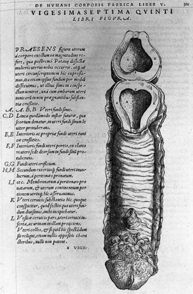 El Anatomista. Aparentemente incapaz de imaginar una mujer sin algún ...
