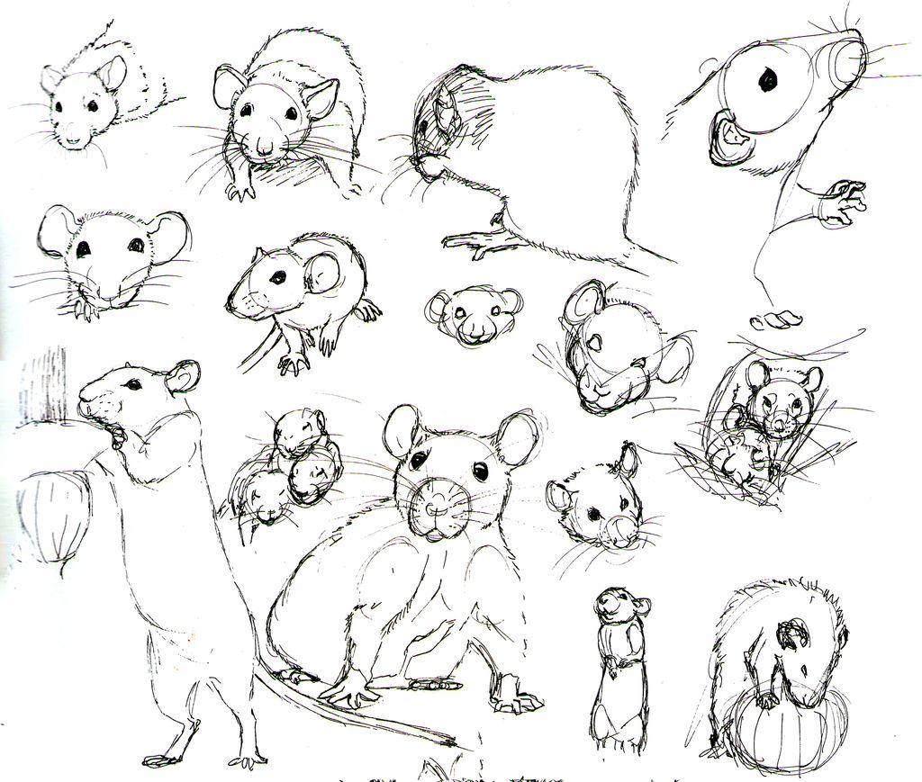 Hoe teken je een rat. | Cuadernos de dibujo | Pinterest | Roedores ...