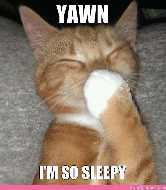 Yawn, I'm So Sleepy | Cute Captions