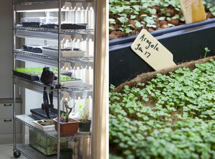 This Shelf Works Great Love Sprouting Microgreens