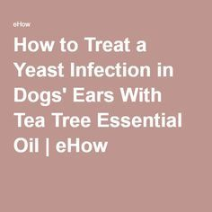 How to Treat a Yeast Infection in Dogs' Ears With Tea Tree Essential Oil | eHow
