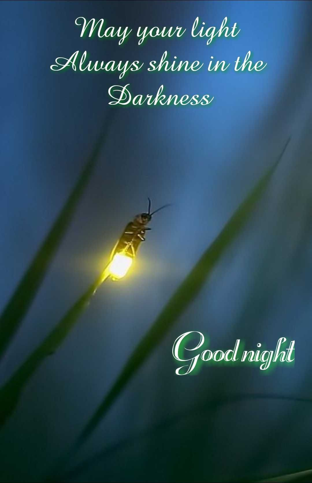 Have A Wonderful Evening My Friend Sleep Well Good Night Messages Good Night Qoutes Good Night