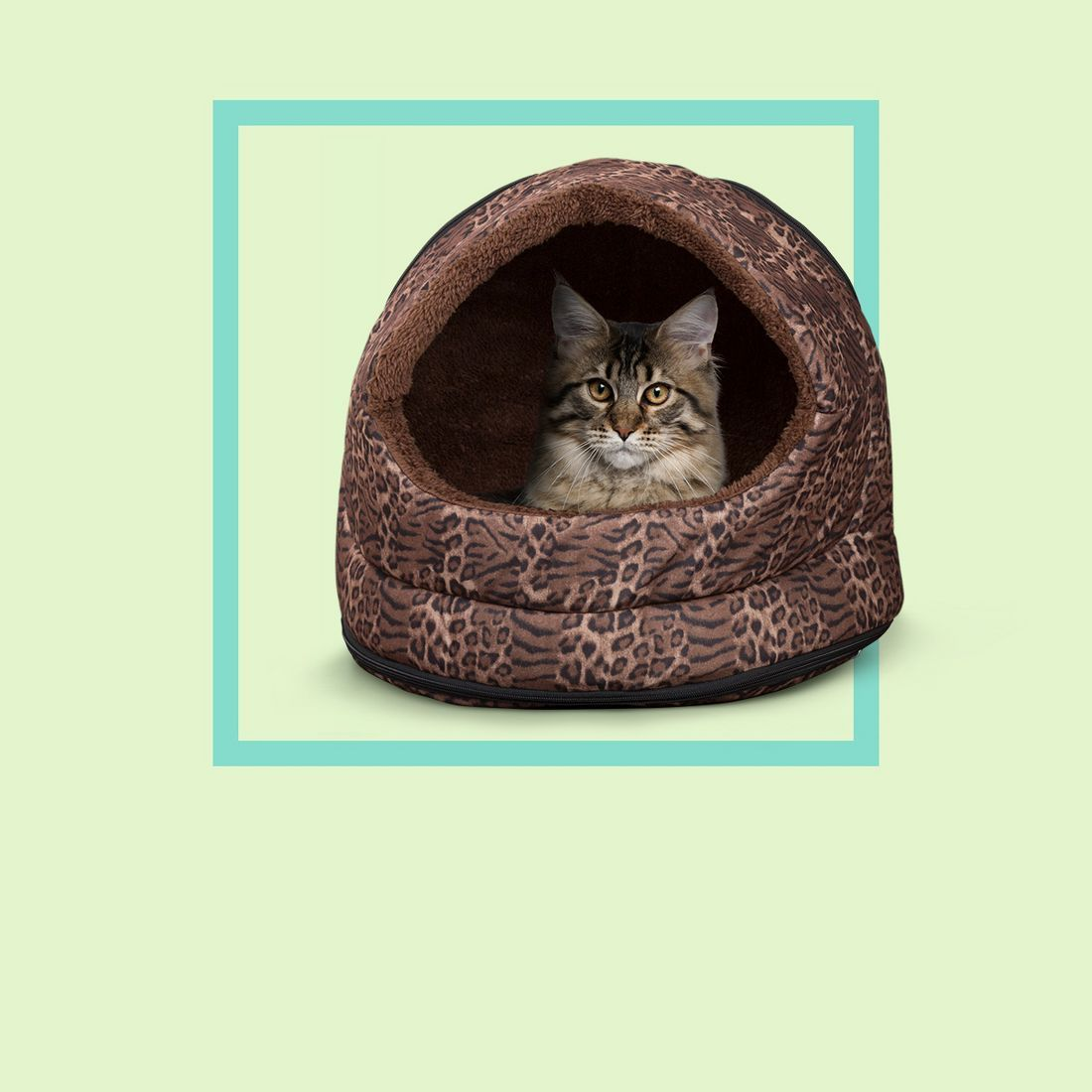 New Cat Checklist Target In 2020 Cute Cats And Kittens Cat Checklist Cats And Kittens