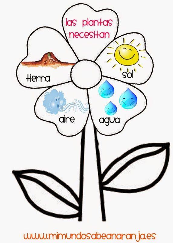Las Plantas Infantil Buscar Con Google Cole