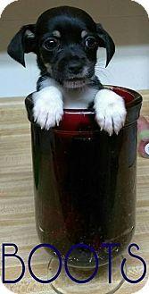 Pin By Rena Becker On Dogs Pets Dachshund Mix Schnauzer Mix