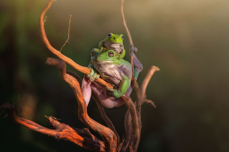 carry by Ellena Susanti on 500px