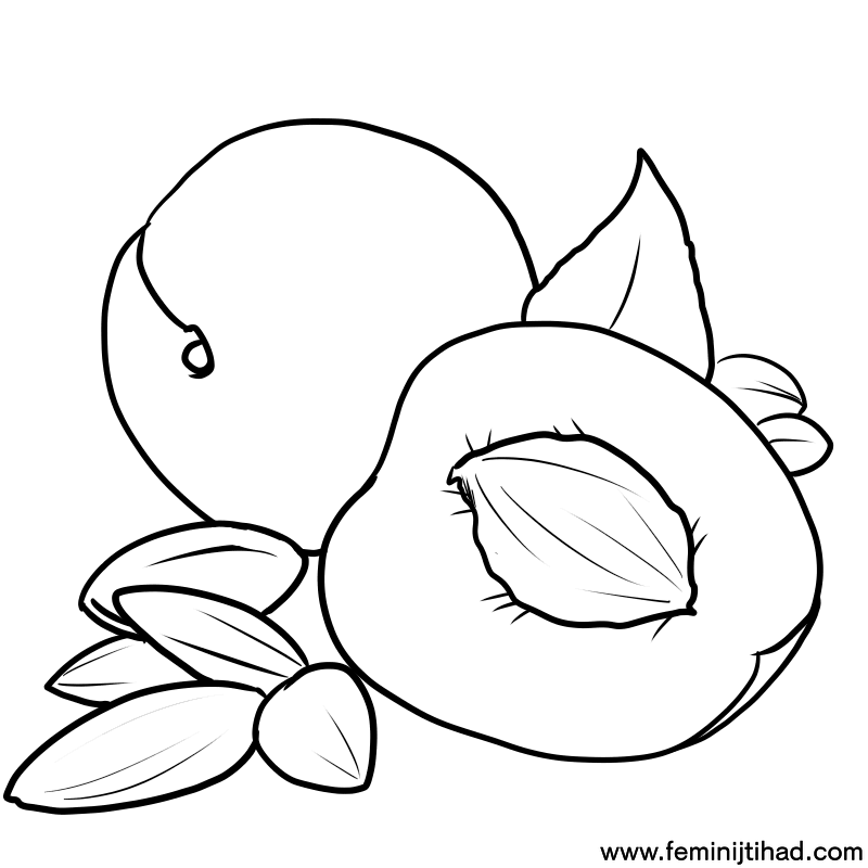 Free Apricot Coloring Pages To Print Coloring Pages For Kids Animal Coloring Pages Coloring Pages To Print Coloring Pages