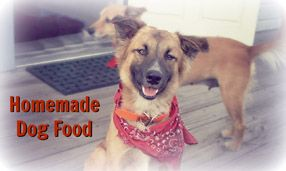 Homemade dog food recipe that allows flexibility for food allergies homemade dog food recipe that allows flexibility for food allergies forumfinder Images