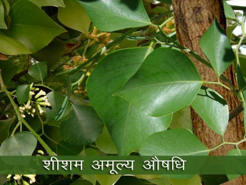 Green tea diet pills myproana image 3