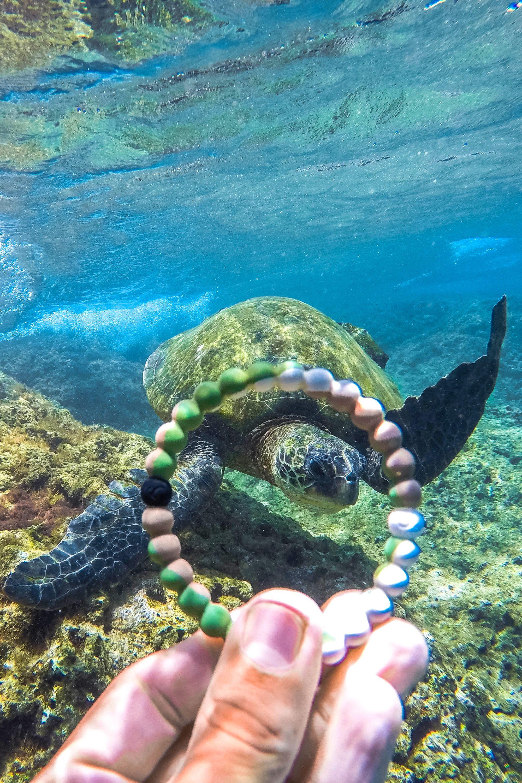 Best 25+ Where Do Turtles Live Ideas On Pinterest