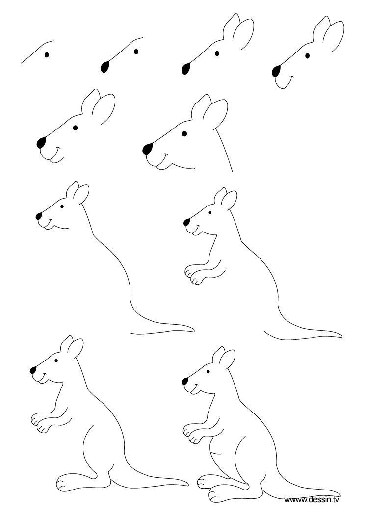 Kangaroo Kangaroo Draw Ahow Draw How To To Ato Draw A Kangaroo Kangaroo Drawing Animal Drawings Flower Drawing