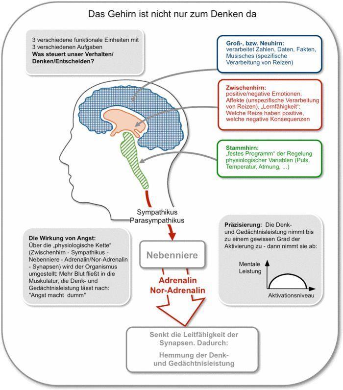 Vpa Verhaltenspraferenzanalyse Personlichkeitsentwicklung Kommunikation Bildung Ogrenme Science Egitim