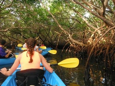 Canterbury School of Florida Marine Studies curriculum includes several marine clubs like our Kayak Club. Students launch into the estuaries behind our school and take trips to the Bay and nearby Weedon Island.