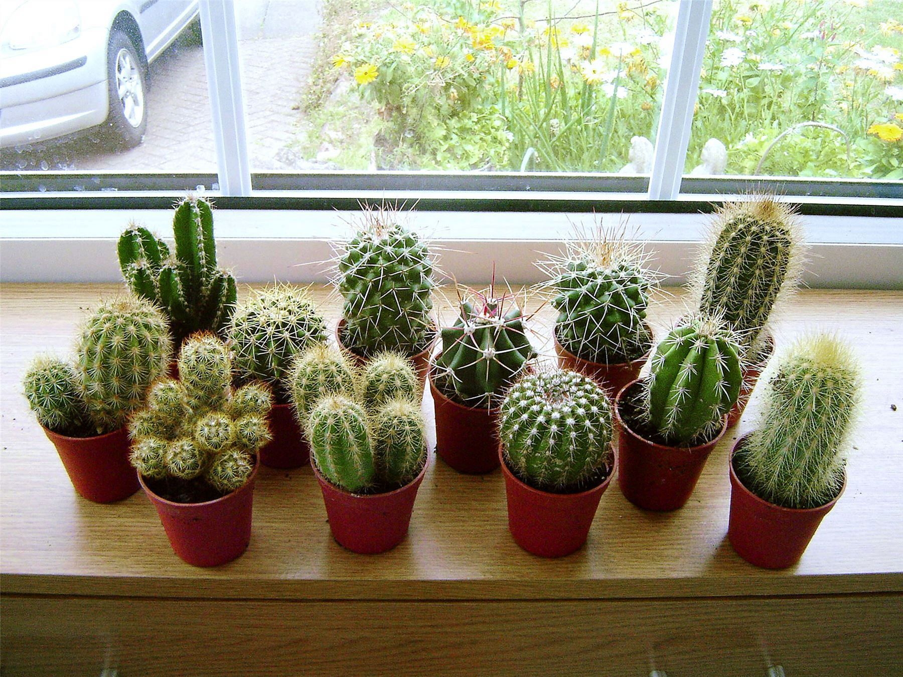 23 Stunning Indoor Cactus Plants In Pots Ideas Freshouz Com Indoor Cactus Indoor Cactus Plants Indoor Plants