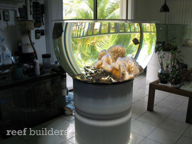 Large Reef Aquarium Bowl 115 Gallons