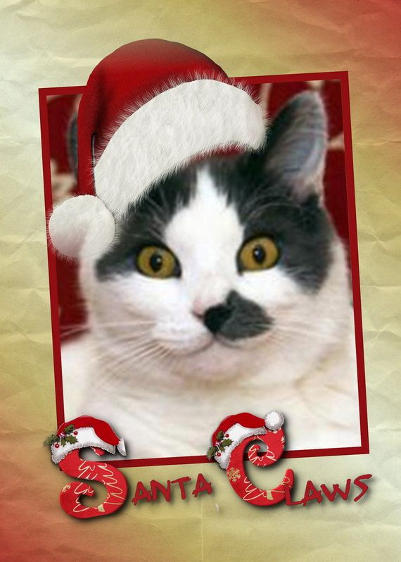 Santa Claws  is Oh So Cute