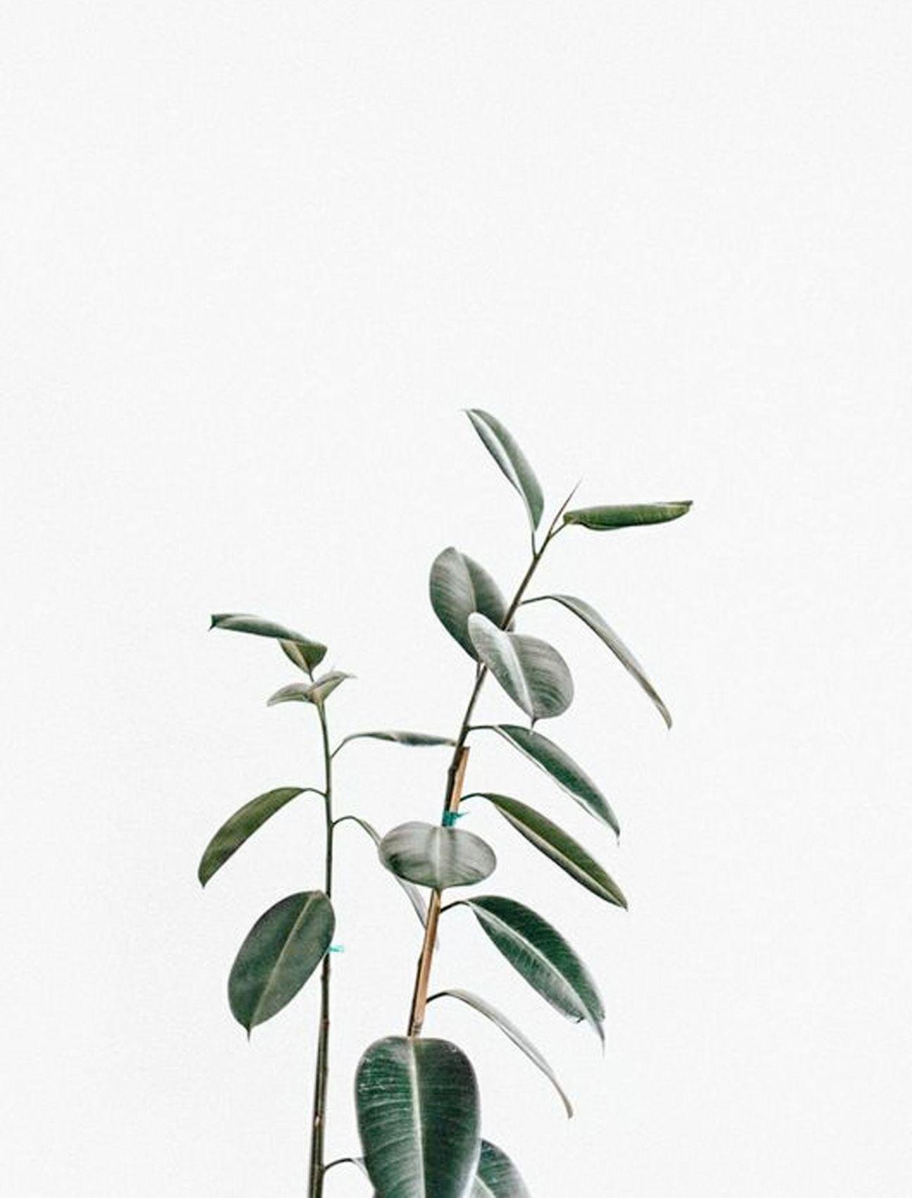 Botanical | minimal | minimal living | minimalist tag ...