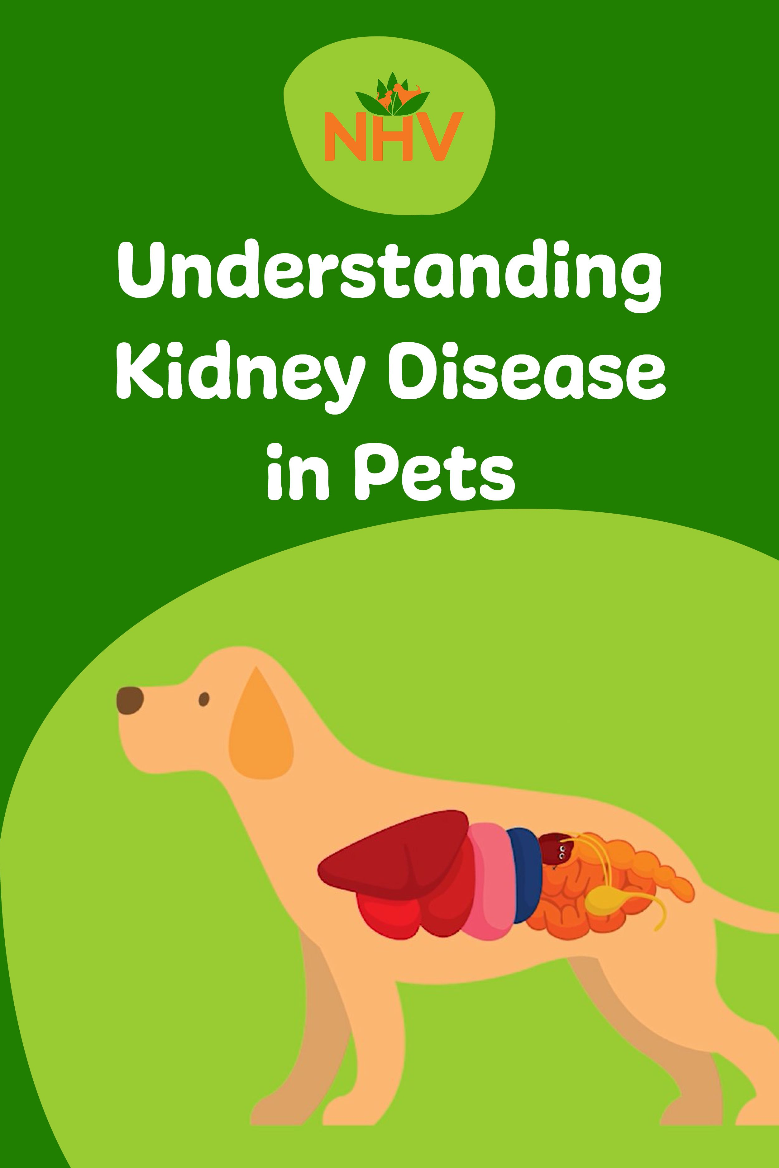 Does your pet have Kidney Disease? This informative video