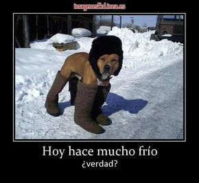Imagen De Hoy Hace Mucho Frio Verdad Memes Perros Memes De Frio Perros Disfrazados