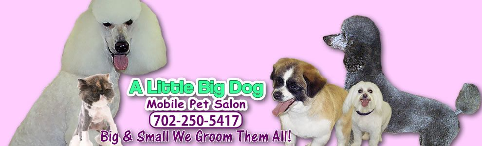 A Little Big Dog Mobile Pet Salon Dog Groomer Las Vegas Cat