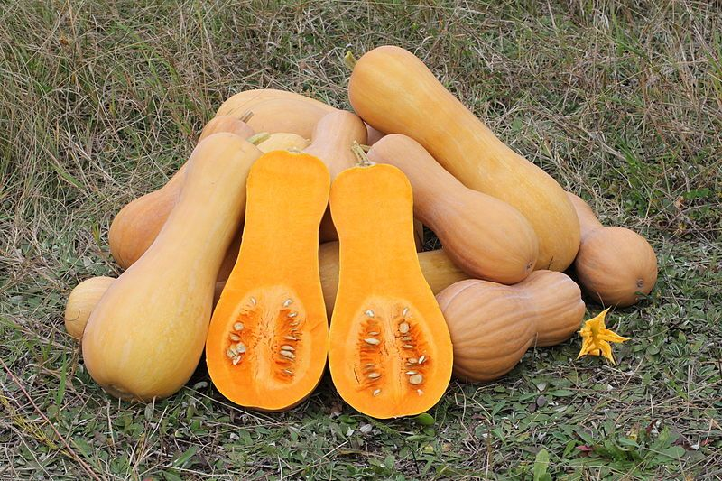 how to cook winter squash in microwave