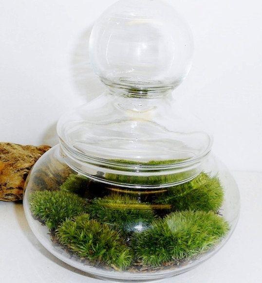 Apo jar terrarium